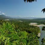 Plantas domesticadas por los precolombinos son las dominantes en Amazonía