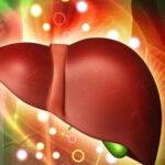 Diabetes: fármaco liraglutida sería eficaz contra el hígado graso