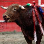 Maltrato de animales sería penado con carcelería de 2 a 5 años