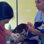 Aprueban proyecto de ley que considera delito el maltrato a animales