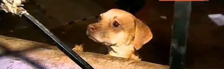 Elizabeth Vergara, propietaria del departamento donde se rescató a 14 perros que permanecían sin alimentos desde hace varias semanas, anunció que denunciará al inquilino que se retiró del lugar sin informarle.