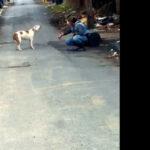 YouTube: mira cómo reacciona un perro al ser rescatado (VIDEO)