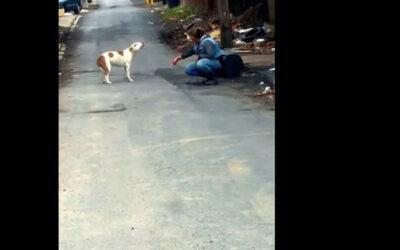 YouTube muestra la reacción de un perro luego de ser rescatado mientras deambulaba por las calles de Harrisburg en Pensilvania, en los Estados Unidos.