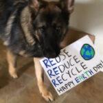 YouTube: conoce a Baron, el perro reciclador (VIDEO)