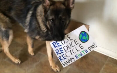 YouTube muestra hoy a un perro que ayuda a reciclar botellas de plástico, así como una lata de Red Bull.
