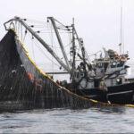 Suspenden por cinco días pesca de anchoveta en zona norte-centro