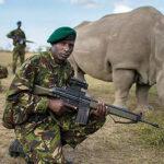 Sudan: comandos custodian rinoceronte blanco las 24 horas del día