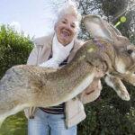 YouTube: conoce al conejo más grande del mundo (VIDEO)
