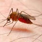 Día de la malaria: mal mata a medio millón de personas al año