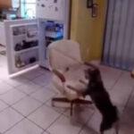 YouTube: mira cómo esta mascota se roba la comida (VIRAL)