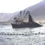 Suspenden captura de anchoveta en diversas zonas