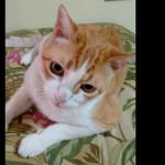 YouTube: gato 'artista' canta al ritmo de su amo (VIRAL)