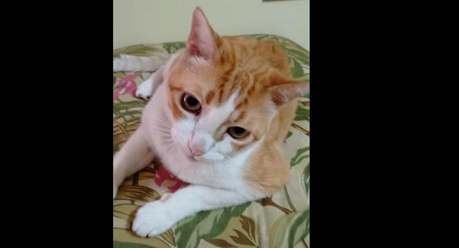 YouTube presenta esta vez a un gato artista que canta al ritmo de su amo. El clip se ha vuelto viral en las redes sociales.