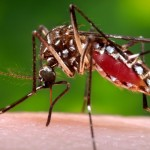 Solicitan atención ante posible llegada de virus del zika al Caribe