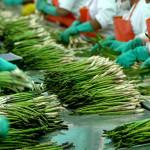 CNN: Perú es un ejemplo de exportación de productos agrícolas
