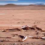 Medio ambiente: alertan sobre extinción masiva del hombre