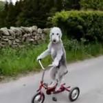 YouTube: perro montando triciclo causa furor en la red (VIRAL)