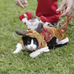 EEUU: miles de personas exhiben su pasión hacia los gatos