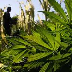 ONU: lucha contra el narcotráfico en Perú va por buen camino