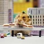 YouTube: hámster que se come una ciudad es viral
