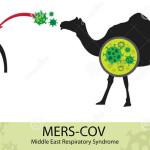 OMS: aún no hay contagio del coronavirus de humano a humano