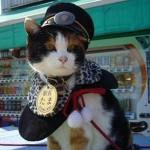 Japón: muere Tama, la gata que fue nombrada jefa de estación