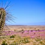 Chile bajo amenaza de convertirse en un gran desierto