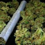 Marihuana: droga más consumida por presos de 7 países del Caribe