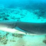 Descubren tiburones en cráter de volcán submarino (VIDEO)