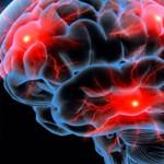 Nuevos conocimientos sobre cómo el cerebro forma recuerdos