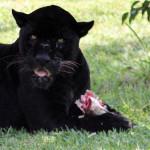 Parque de Las Leyendas: confirman sacrificio de animales