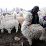 Heladas: declaran en emergencia localidades de centro y sur