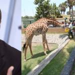 Contralor: Sí sacrificaron animales en Parque de las Leyendas