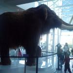 Los mamuts murieron por abrupto calentamiento global
