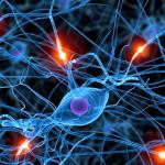 Una molécula protege al cerebro de efectos del abuso del alcohol