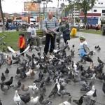 Heces de palomas ocasionarían asma y bronquitis crónica