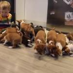YouTube: mira cómo es la vida con 16 cachorros en casa