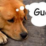 Italia: multarán a dueños de perros que ladren en la noche
