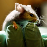 Terapia génica devuelve la audición a ratones sordos