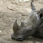 Parque de Las Leyendas: denuncian que animales están sin alimentos
