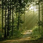 Nueva York: anciano sobrevive en bosque bebiendo lluvia