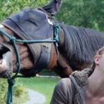 Caballos y humanos comparten expresiones faciales muy similares