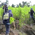 Informe UNODC: Bolivia reduce por cuarto año consecutivo sus cultivos de coca