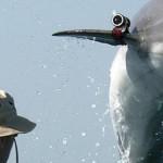 Hamas: aseguran que delfín capturado 'espiaba para Israel'