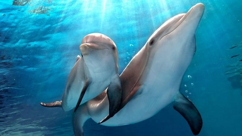 delfin1-800