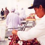 India: Atractivos comerciales de su mercado