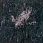 Victor Frankenstein: tenebroso tráiler del monstruo clásico