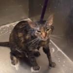 YouTube: gato se queja y pide que no lo bañen (VIRAL)