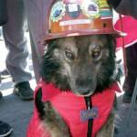 Facebook: perro que acompaña protestas es sensación en internet