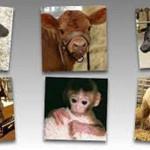 Apoyan extender veto a clonación animal a las crías e importaciones